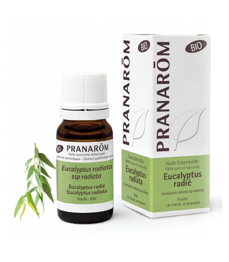 Huile Essentielle Eucalyptus Radié Bio - Pranarôm